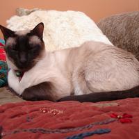 Adina1968's avatar