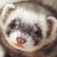 Chrissi85's avatar