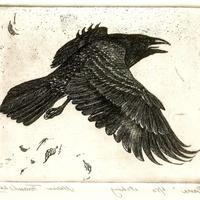 Espiritus_Corvus's avatar