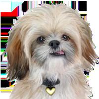 HeartBridgeGallery's avatar
