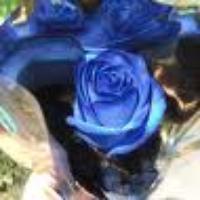 Love_or_Like's avatar