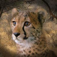 MommaDuma's avatar