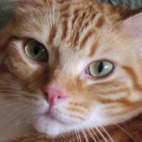 PSUMFT's avatar