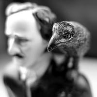 Raven_Rising's avatar