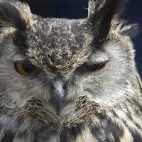 Rotwang's avatar