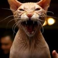 WillWorkForChocolate's avatar