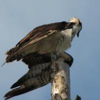 aaronheaberlin808's avatar