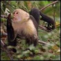barumonkey's avatar