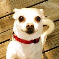 bippee's avatar