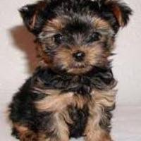 dkrluvmydogs's avatar