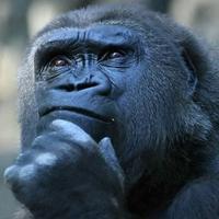 gorillapaws's avatar