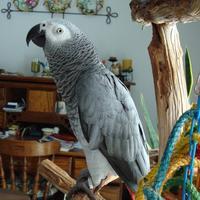 greylady's avatar
