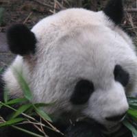jlelandg's avatar
