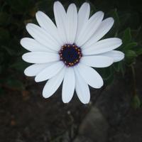lugerruger's avatar
