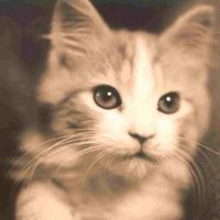 majorrich's avatar