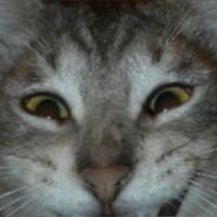 martianspringtime's avatar