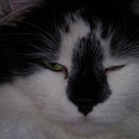 oreo45's avatar