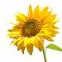 pixiequeen12's avatar