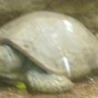 roundsquare's avatar