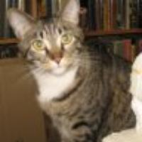 tabbycat's avatar