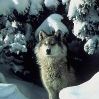warriorwolfclaw's avatar