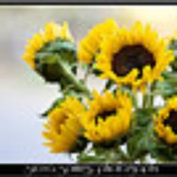 Sunshine2u's avatar